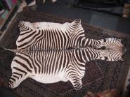 Zebrafell Bergzebra
