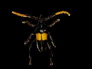 Laufkäfer, gelb schwarz