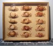 Krebse (Crustacea) im Museumsrahmen