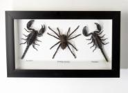 Spinne und Skorpione
