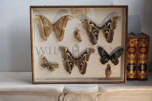 Antikrahmen mit Schmetterlingsfaltern