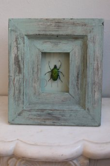 Käfer im Rahmen