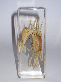 Krabbe in Acryl