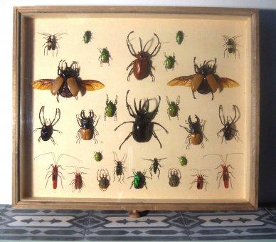 Käfer im antiken Museumsrahmen
